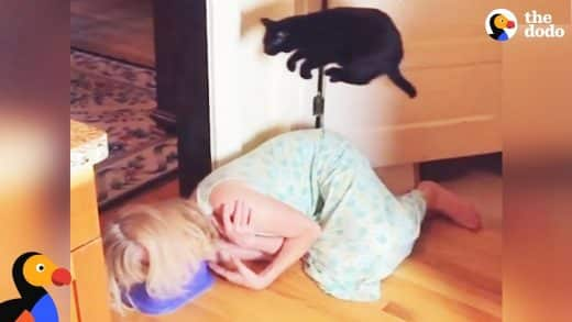 Cat-Is-Pretty-Sure-Kitchen-Floor-Is-LAVA-The-Dodo