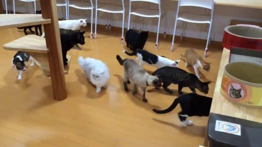 Cats-scared-by-cleaning-robot