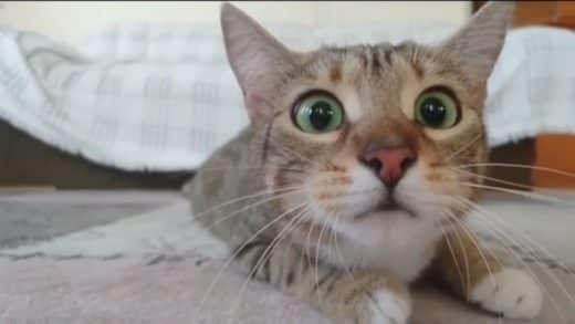 Cats-watching-scary-movies-video