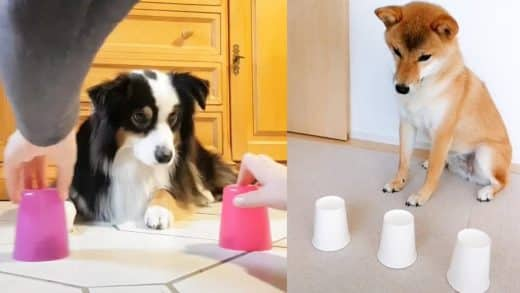 Dog-Reaction-to-Magic-Trick-Funny-Dogs-with-Magic-Tricks