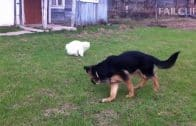 Dog-Scared-Of-Cats-Funny-Dog-and-Cat-attachment