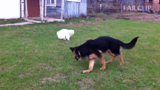 Dog-Scared-Of-Cats-Funny-Dog-and-Cat
