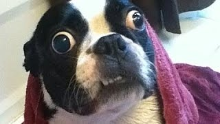 Dogs-Hate-Going-To-The-Vet-Funny-Dog-Vines-2016