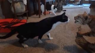 Dogs-and-Cats-Scared-of-Stuffed-Toys-Compilation