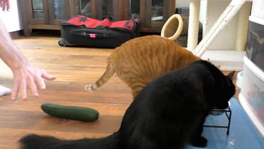 Don39t-Scare-Your-Cat-With-a-CUCUMBER