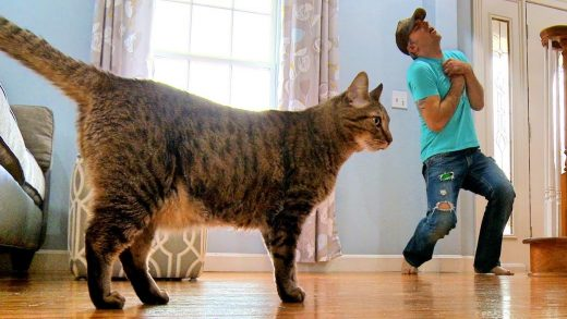 Faking-My-Death-In-Front-of-My-Cat-Mean-Kitty-Reacts