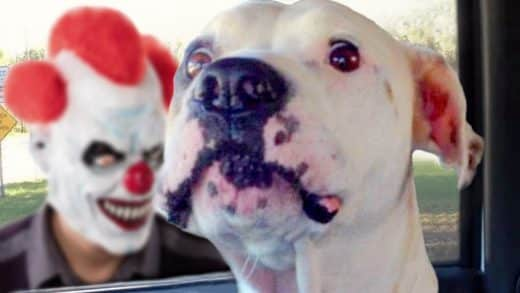 Funny-Dogs-Scared-of-Masks-Compilation