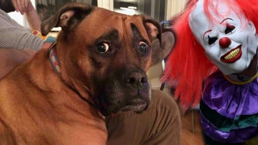 Funny-Dogs-Scared-of-Masks-Compilation-NEW
