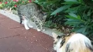 Kitten-scared-of-cat-because-the-first-time-he-saw-a-adult-cat-else-than-her-mom