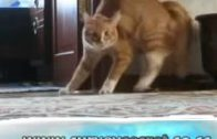 Kitty-CATS-scaredThe-FUNNY-Mohammed-Scardy-CATS-im-im-2-scared-2-Mean-CatFUNNY-SongBoonaa-Mr-attachment