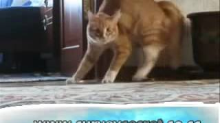 Kitty-CATS-scaredThe-FUNNY-Mohammed-Scardy-CATS-im-im-2-scared-2-Mean-CatFUNNY-SongBoonaa-Mr