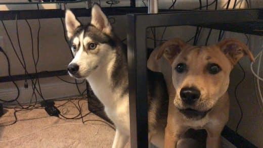 My-Dogs-Hate-Keanu-Reeves