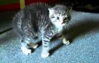 Scared-Kitten-attachment