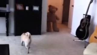Scared-the-poop-out-of-my-Pug