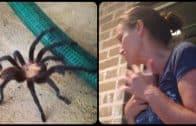 Tarantula-Nearly-Scares-Mom-to-Death-attachment