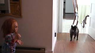 my-dog-KATO-meets-CHUCKY